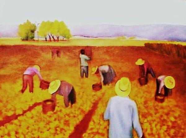 Clotilde Espinosa - The Harvest