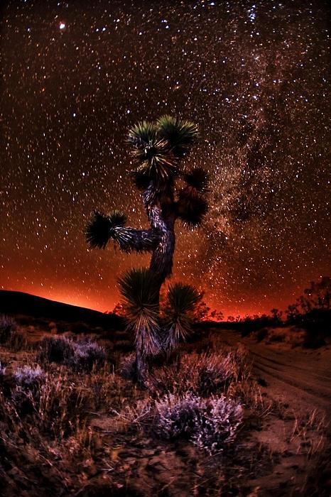 Shane Lund - The Joshua Tree at Night
