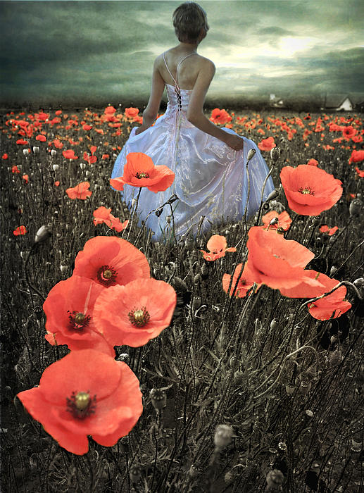 Eugene James - The Poppy Field