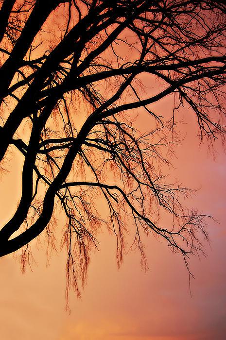 Amy Schauland - The Twilight Tree