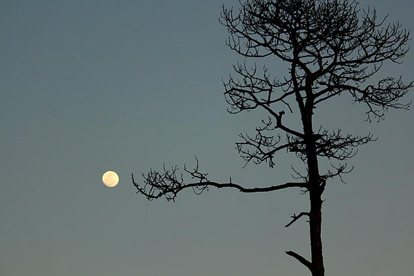 Rosanne Jordan - Tickle the Moon