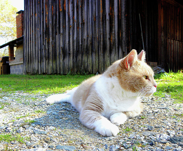Sandi OReilly - Toby Old Mill Cat