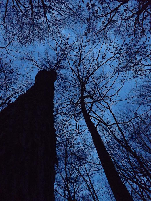 Gerald Strine - Towering into the night