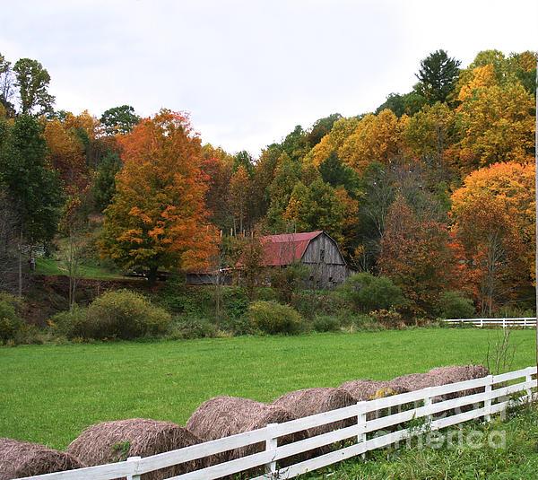 Annlynn Ward - Trade Barn