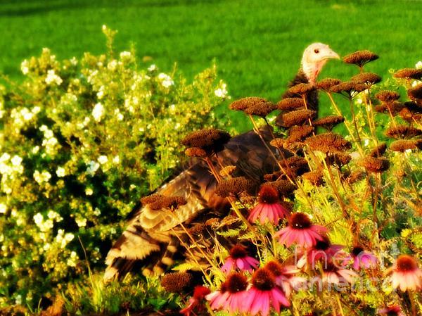 Barbara Henry - Turkey in Flowers