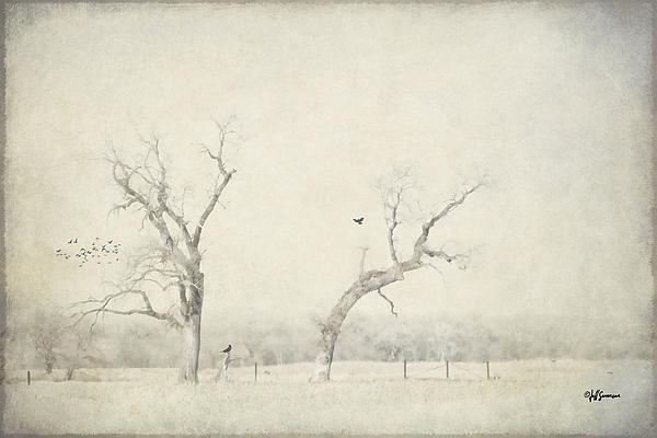 Jeff Swanson - Two Trees in a Field