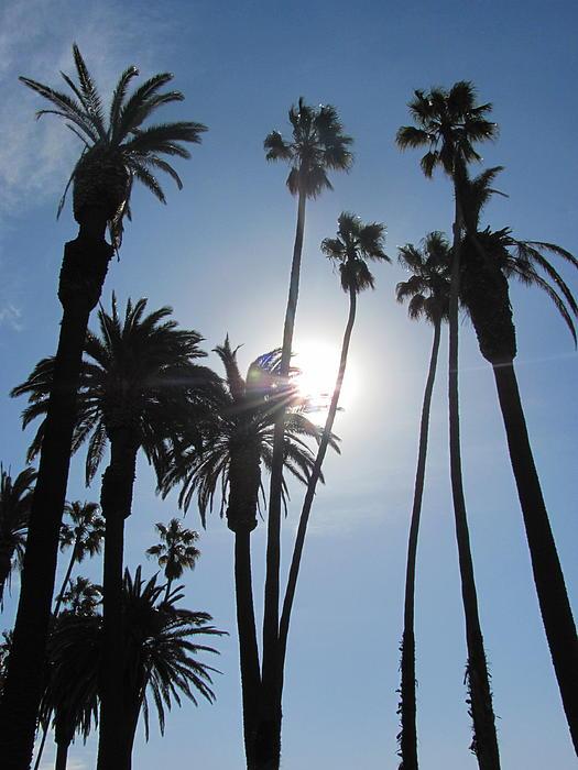 Lynn Menlo - Venice Beach