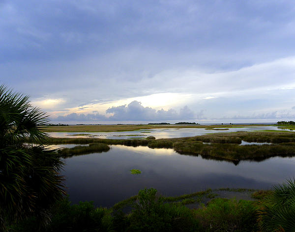 Judy Wanamaker - View From St. Marks Lighthouse