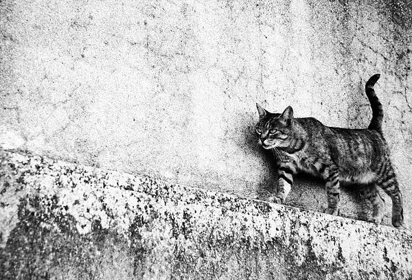 Laura Melis - Walking on the wall