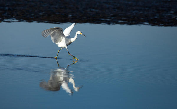 Karol Livote - Walking on Water