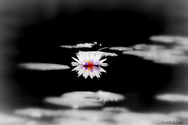 Michelle Billetta - Water Lilly