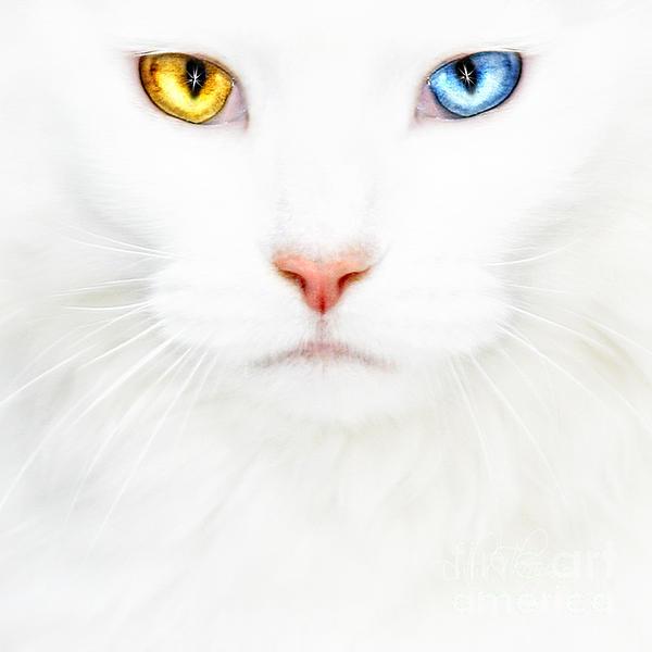 Datha Thompson - White Cat