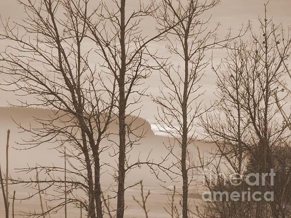 Art Studio - Whitefish Lake Through Trees