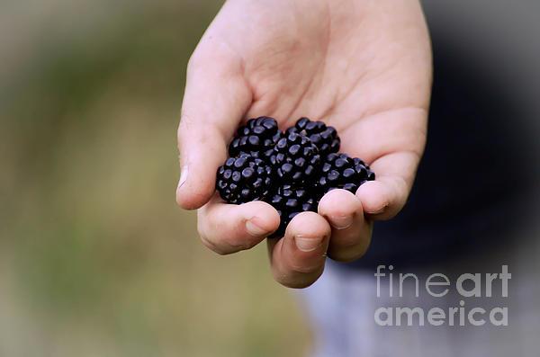 Gwen McFadden - Wild Blackberries