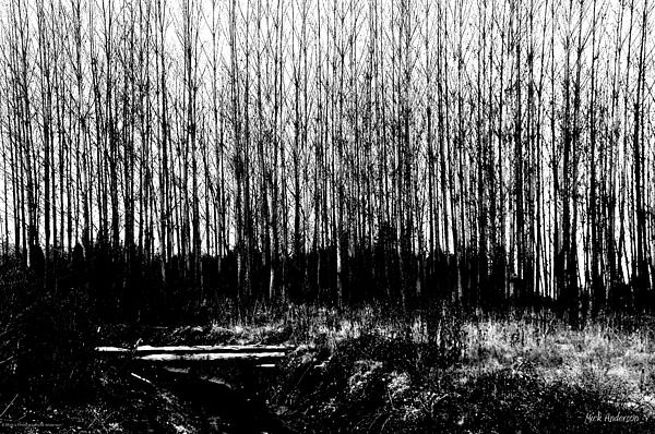 Mick Anderson - Winter Tree Grove in Black and White