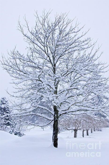 Sean Griffin - Winter Trees