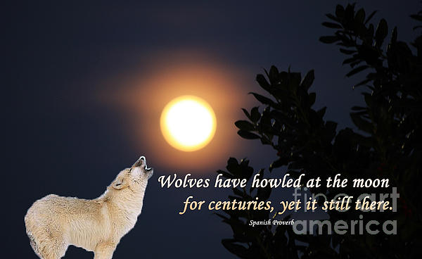 Olahs Photography - Wolves Howled at the Moon