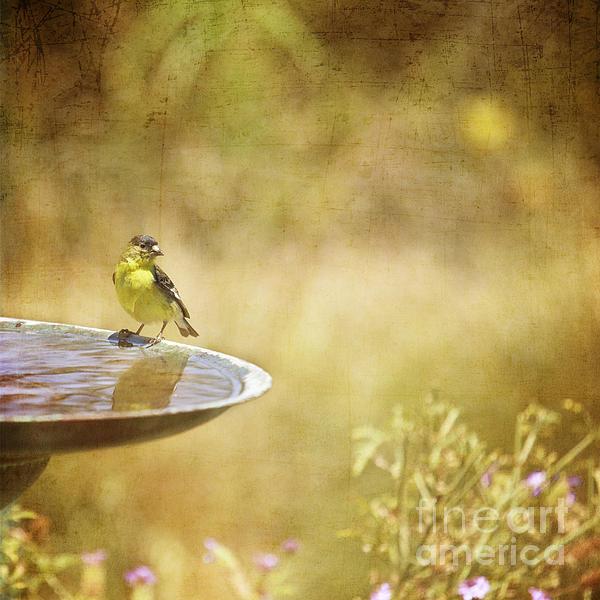Susan Gary - Yellow Bird Upon a Fountain