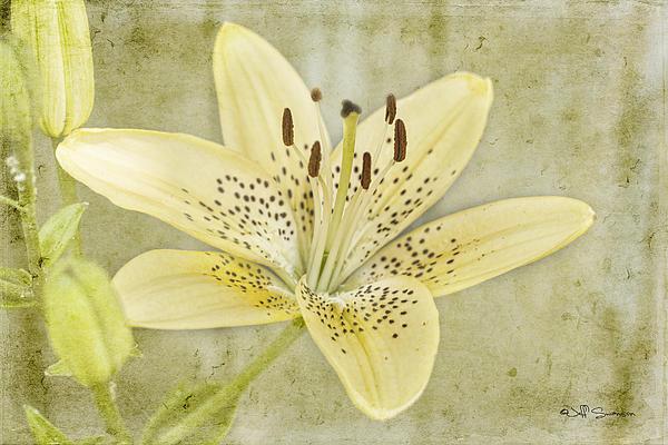 Jeff Swanson - Yellow Lily