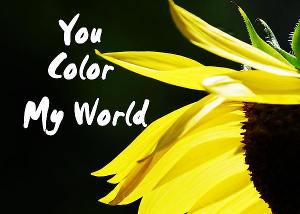 Judy Hall-Folde - You Color My World