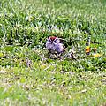 Sparrow by R A W M
