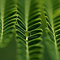 A Green Drop by Michelle Meenawong