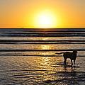 A Mans Best Friend Sunset by Karen Maxwell