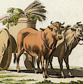 A Roman Farmer And His Wife  Load by Mary Evans Picture Library