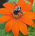 A Taste Of Honey by Dora Sofia Caputo Photographic Design and Fine Art