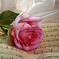 A Tribute To Diana Ross The Rose by Inspired Nature Photography Fine Art Photography