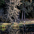 Alder Tree Reflection In Pond by Tracy Knauer