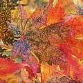 Autumn Audacity I by Leda Robertson