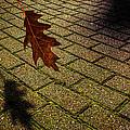 Autumnal Equinox by Bob Orsillo