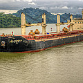 Avocet In The Panama Canal by John Trax