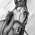 Barbaro by Patrice Torrillo