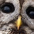 Barred Owl Eye's by Craig Voth
