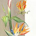 Bird Of Paradise 09 Elena Yakubovich by Elena Yakubovich