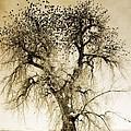 Bird Tree Fine Art  Mono Tone And Textured by James BO  Insogna