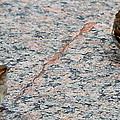 Birds Of A Feather by Debbie Levene