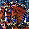 Budwieser Clydesdale by Tommy Anderson