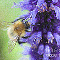 Bumblebee On Buddleja by Liz Leyden