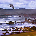 California Highway 1  by Kandy Hurley