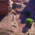 Canyon De Chelly Farmland by Tracy Knauer