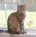 Cat In The Window by Michelle Powell