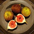 Common Fig Ficus Carica by Venetia Featherstone-Witty