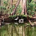 Cypress Swamp  by Peg Urban