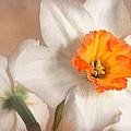 Daffodil by David and Carol Kelly