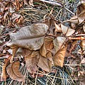 Dead Leaves by Michelle Meenawong