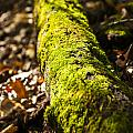 Dead Log With Moss by Donald  Erickson