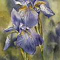Double Blue Irises by Alfred Ng